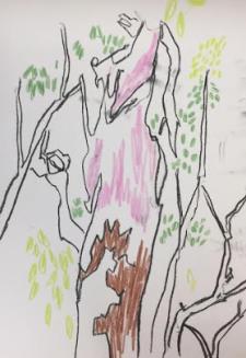 Eucalypts 3